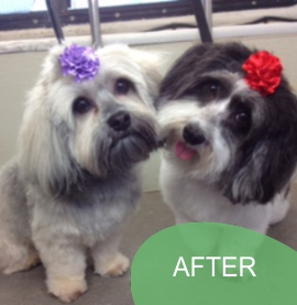 Mobile dog grooming orlando dazzling dogs mobile salon mobile grooming orlando fl coupon solutioingenieria Images